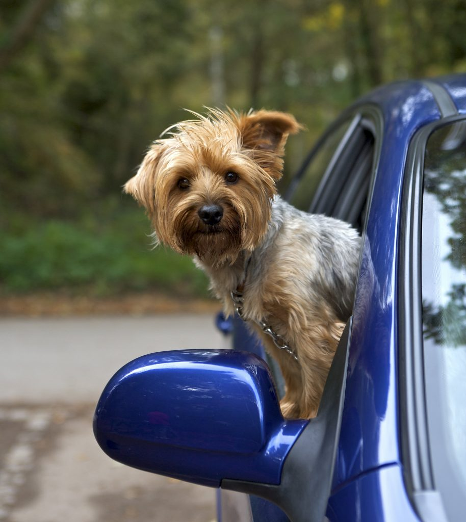 Tips for Taking Your Pet on a Road Trip - Ed Murdock Superstores - Lavonia, GA